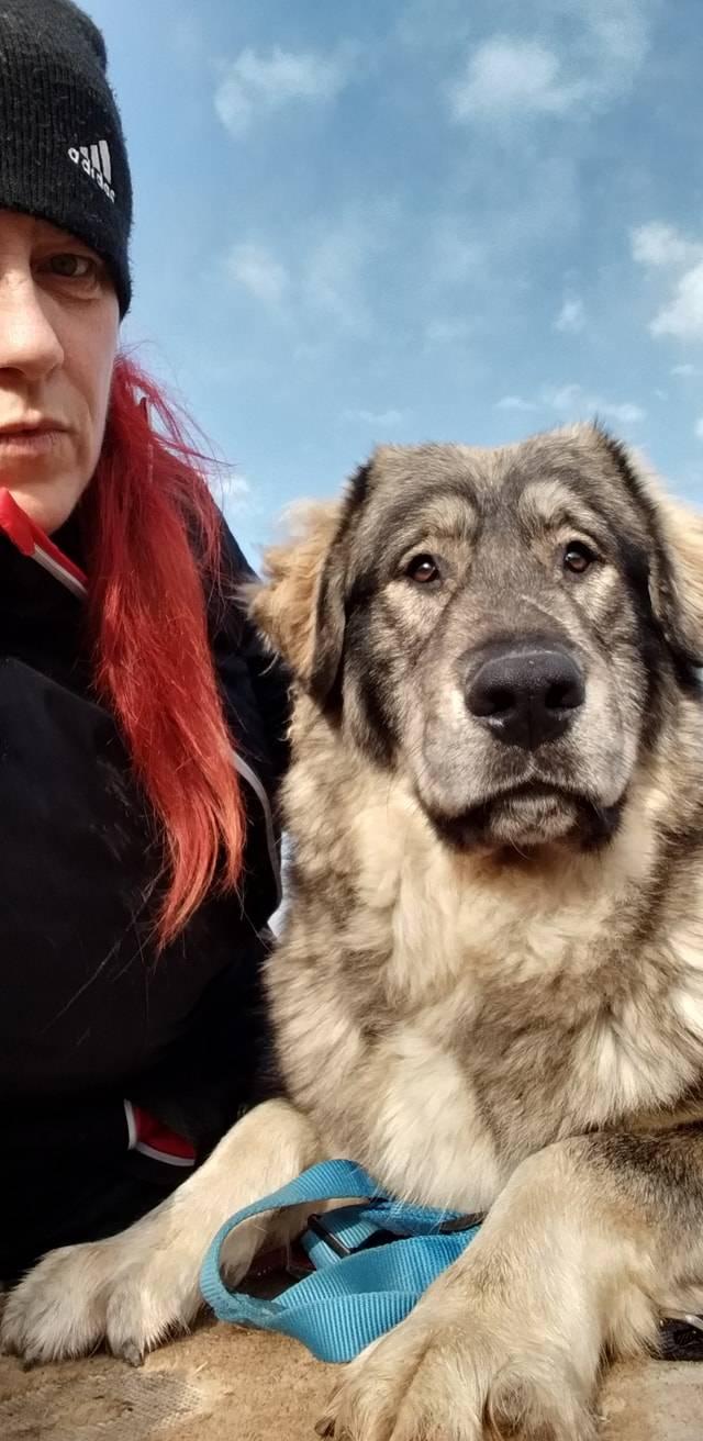Buba e Yoghi, i cani abbandonati a Gerenzano, ancora in cerca di casa