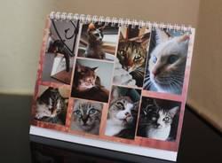 calendario animali reporter per caso