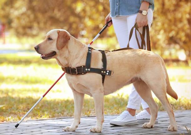 cane guida ciechi
