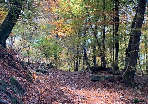 I cartelli nel bosco contro gli sporcaccioni