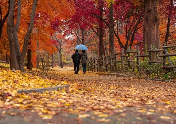 coppia passeggiata autunno - Foto di chulmin park da Pixabay
