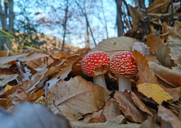Funghi - foto di Vito Strippoli