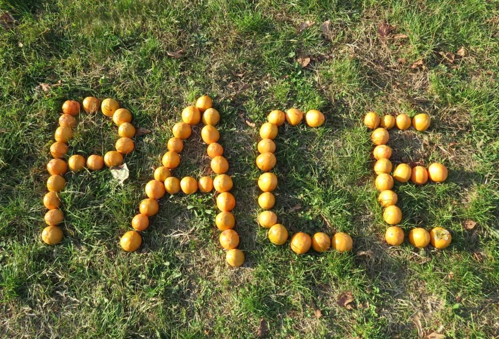 """Kaki Tree Project, la scritta """"Pace"""" nel giardino della scuola primaria di Morosolo"""