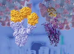 proteina spike SarsCoV2