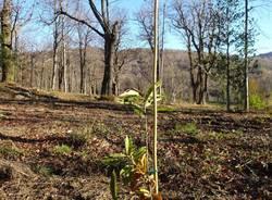 Recupero selve castanili nel  Parco regionale Campo dei Fiori