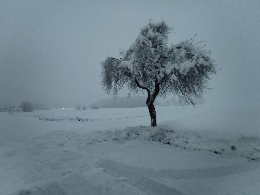 Alberto con neve