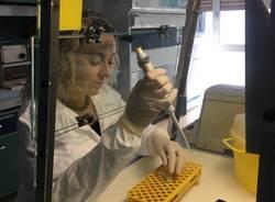 Alessia Lai, la ricercatrice parabiaghese che ha isolato il virus