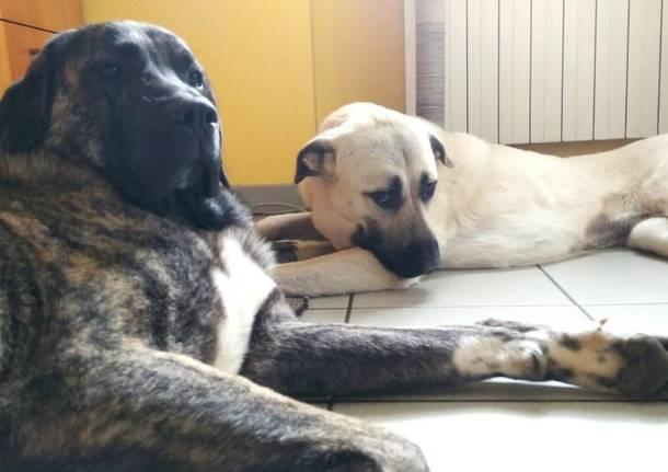 cane e minacce