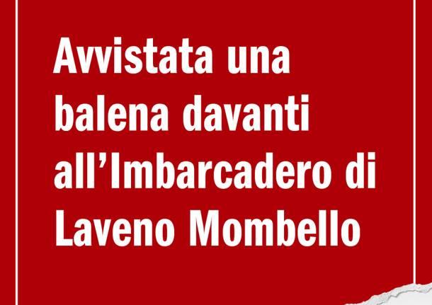 """La gallery delle """"fake news"""" di Varesenews"""