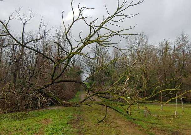 Rifiuti e alberi caduti con la neve, ripulito il Fontanile di San Giacomo a Gerenzano