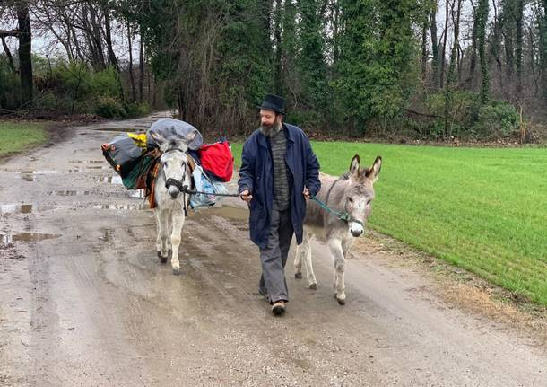 Sta attraversando il Varesotto il viandante con i suoi asinelli, è diretto a Zurigo
