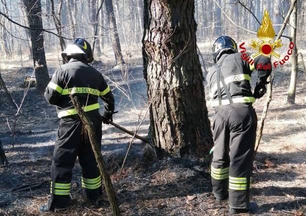 incendio boschi vergiate