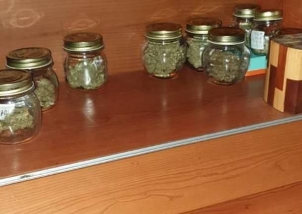Vimercate, odore strano da una casa: spunta una serra con 30 piante di marijuana