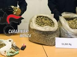 15 kg di marijuana nascosti sotto le foglie ai piedi di un albero a Misinto