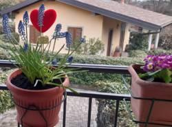 Greenshool Piantumazione Sostenibile, scuola Dante Alighieri di Cocquio Trevisago