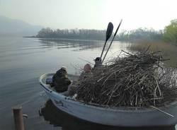 Posa fascine sul Lago di Varese