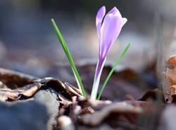 Primavera - foto di Ilario Rizzato