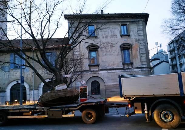 Il trasferimento dell'albero della stazione di Gallarate
