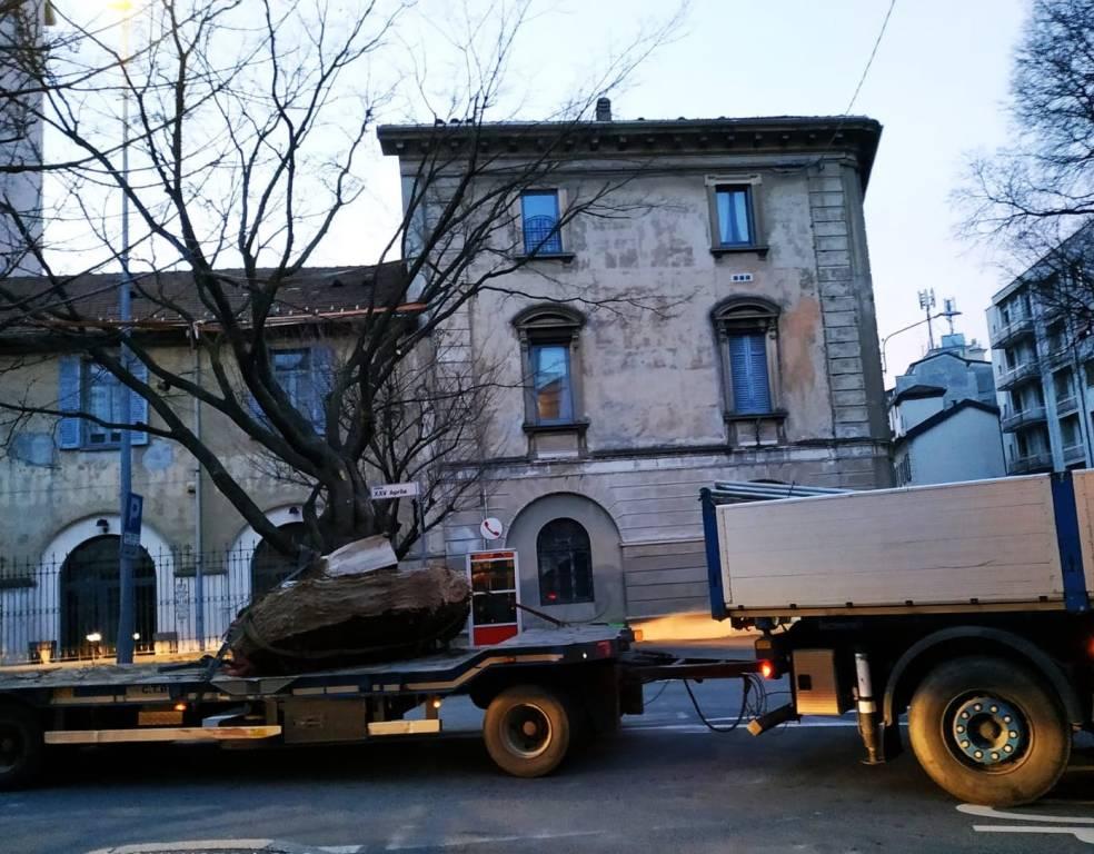 Trasferimento albero Gallarate