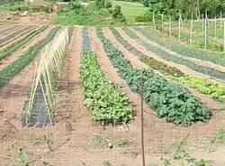 agricoltura campi coltivati