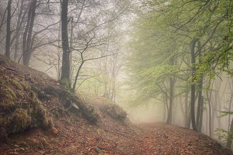 Cuasso al Monte, i boschi - foto di Andrea Betti
