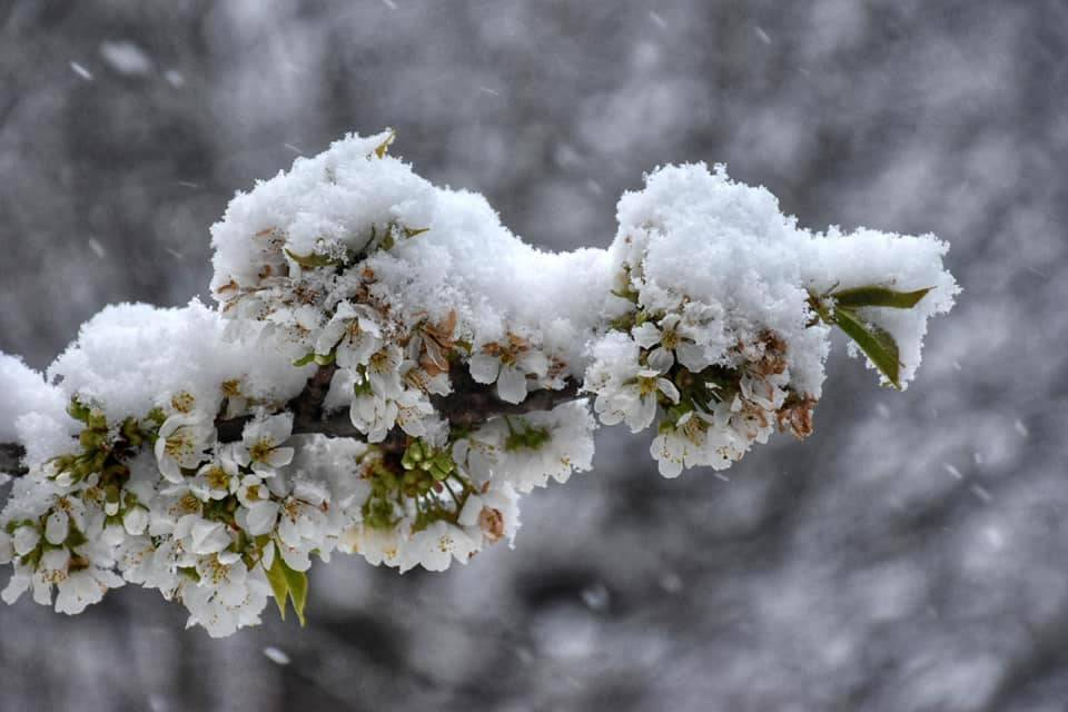 Cuasso al Monte - Nevicata 15 aprile 2021 - foto di Andrea Betti