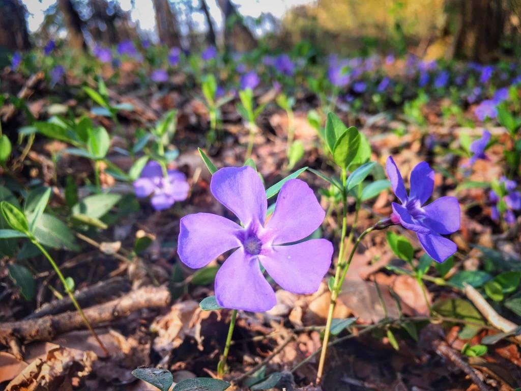 Fiori di primavera - foto di Angela Garegnani