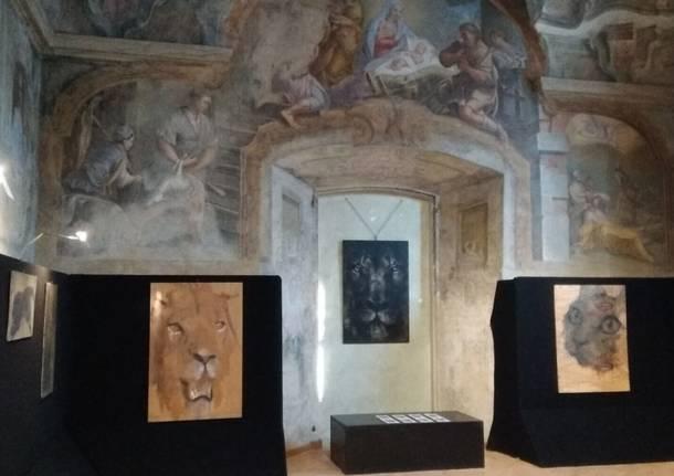 Mostra felini di samuele Arcangioli in sala Veratti