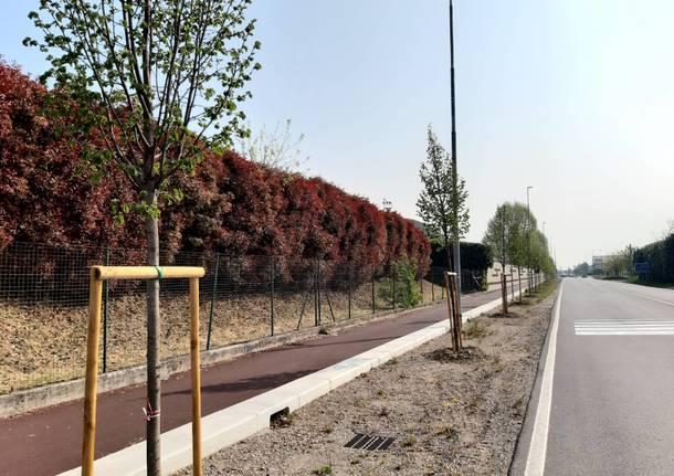 nuovi alberi a Parabiago