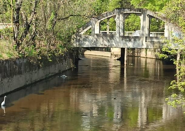 ponte sull'Olona