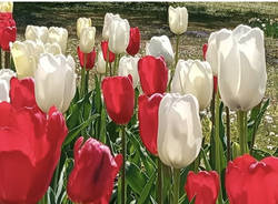 Tulipani Villa taranto