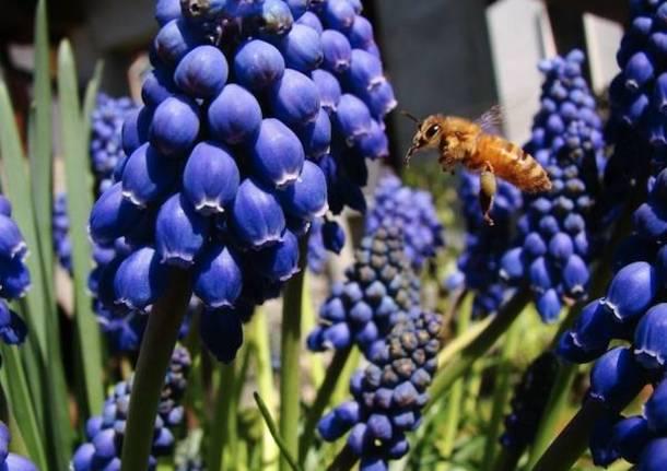 Api e insetti impollinatori nelle foto dei lettori di Varesenews