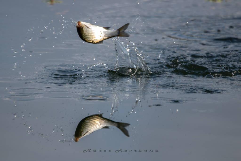 Un tuffo nel Lago di Varese