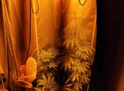 Produzione e spaccio di marijuana, arrestato con 12 piante in casa