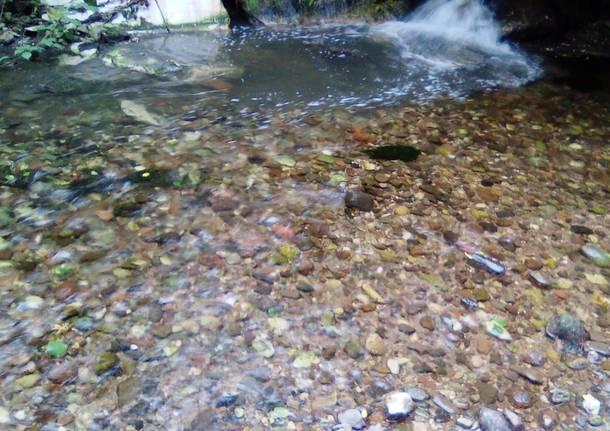 Cantello - Migliora la situazione delle acque del Lanza