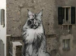 Gatti rovio