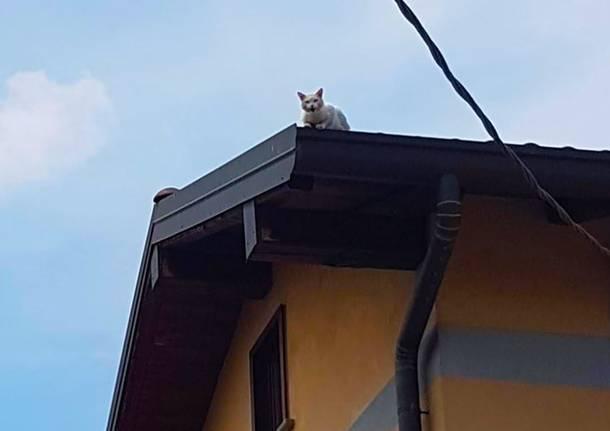 gatto Castano Primo