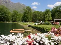 lago delle rose ornavasso