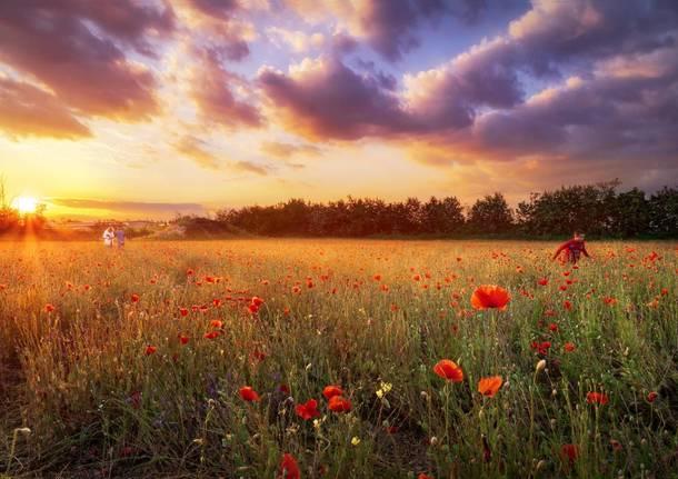 Quando un semplice campo diventa poesia