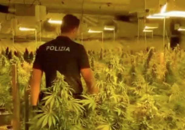 marijuana buscate polizia