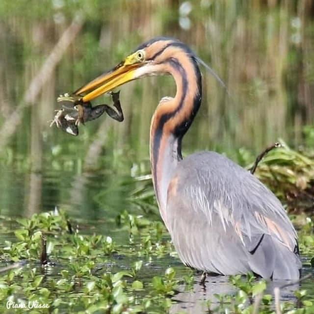 Una pesca abbondante