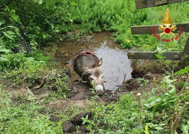 Asilo intrappolato in una pozza, salvato dai Vigili del Fuoco