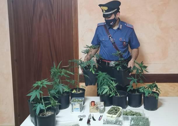 Coltivazione in casa di marjuana, denunciati due luinesi