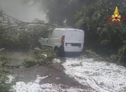 grantola albero caduto