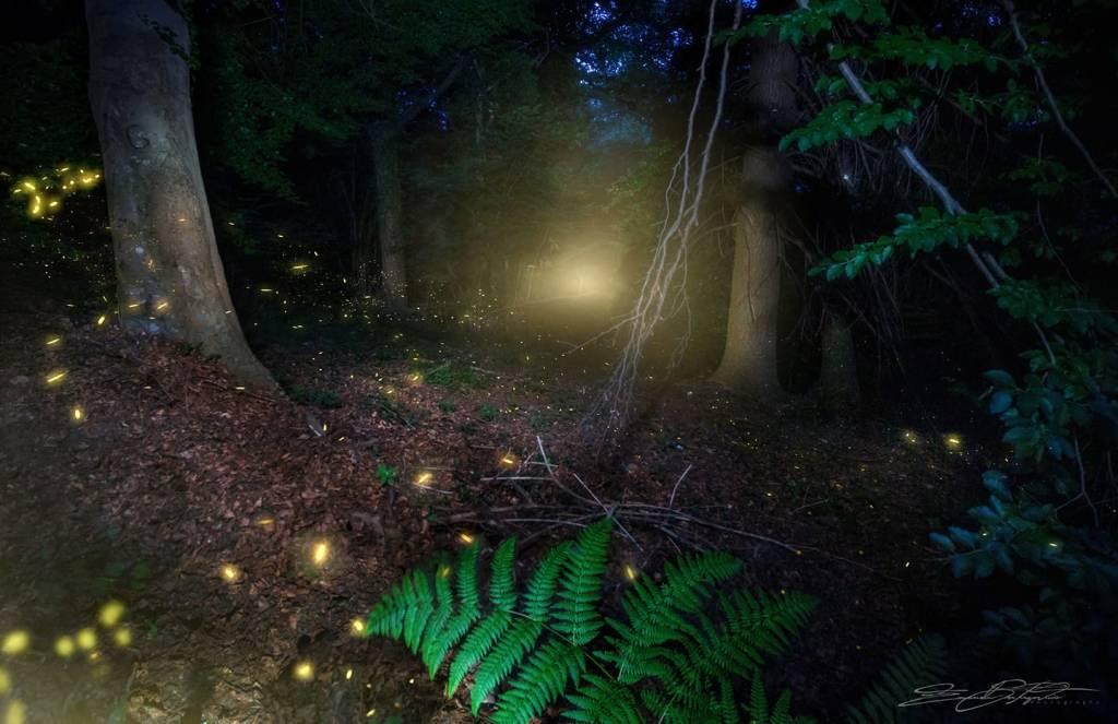 Le lucciole di Marzio