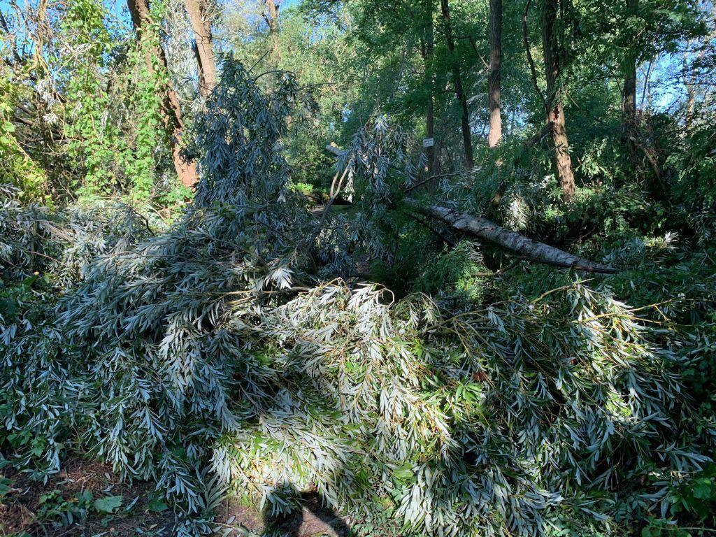 Maltempo, tronchi e alberi caduti all'Oasi della Bruschera di Angera