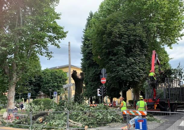 Tradate: l'abbattimento del tiglio di piazza Mazzini