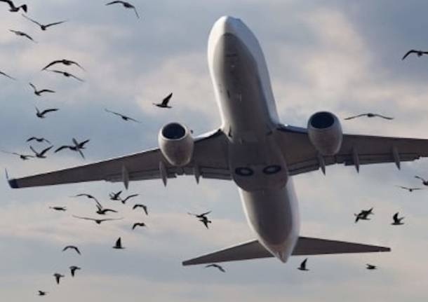 birdstrike Malpensa