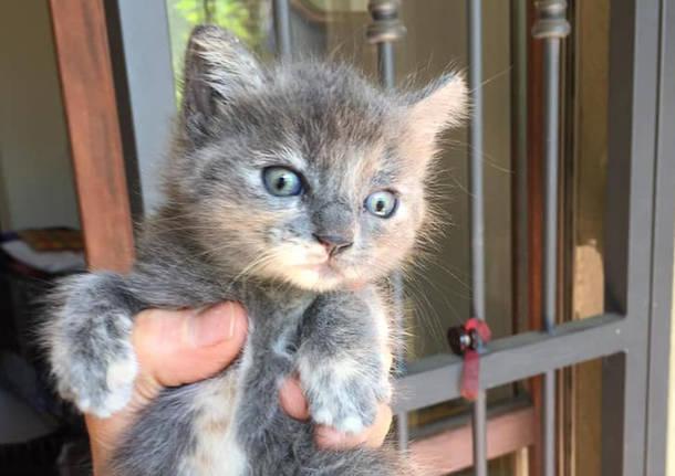gattini abbandonati al cimitero a Nerviano