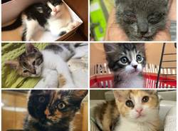gattini da adottare